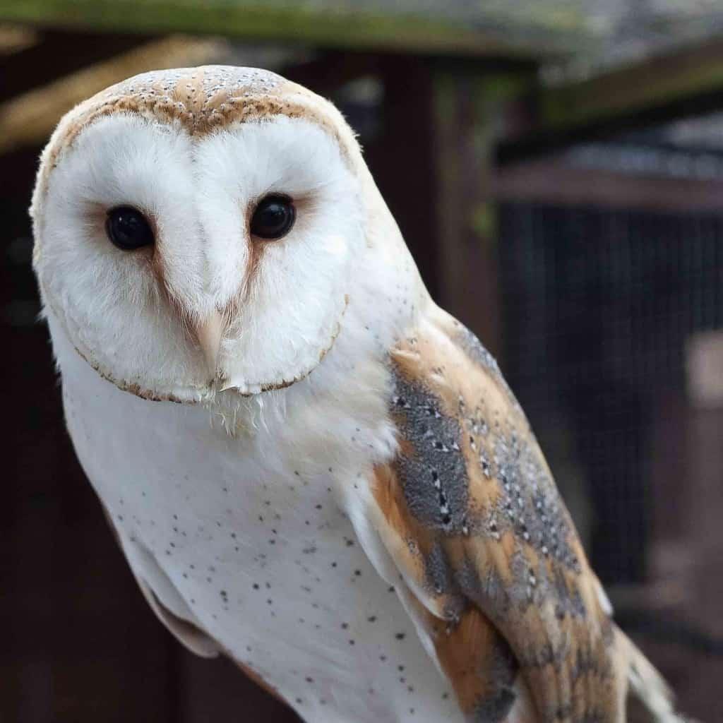 Delyth - The Owls Trust