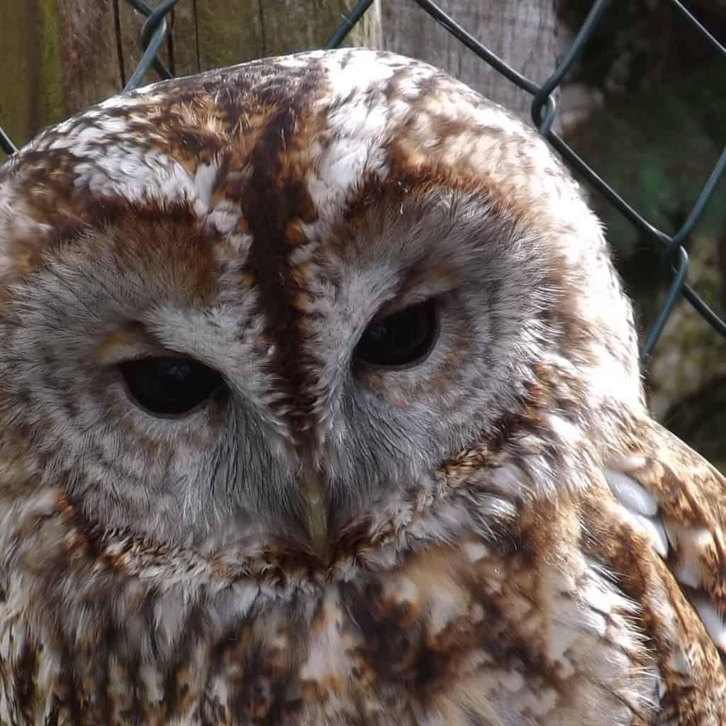 Kilmousky - The Owls Trust