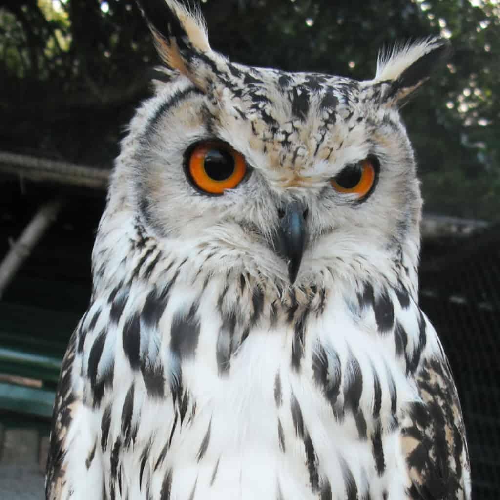 Baldrick - The Owls Trust