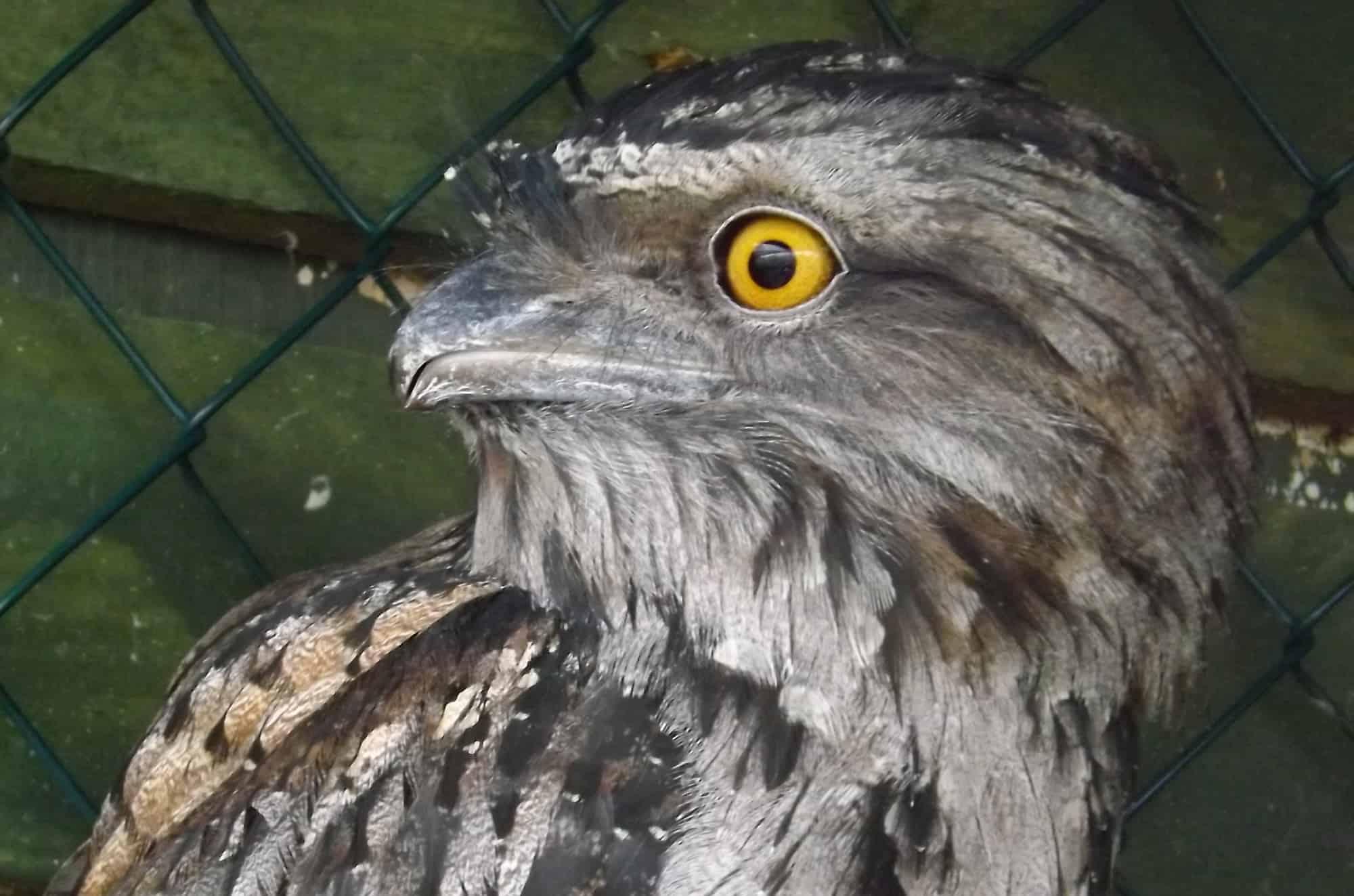 Freddie - The Owls Trust