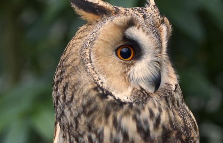 Huw - The Owls Trust