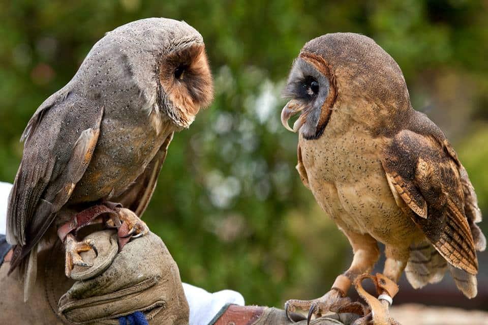 Owl Education Programme