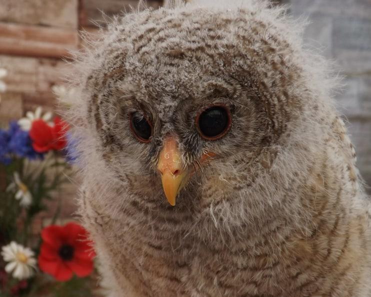 Woodii - The Owls Trust