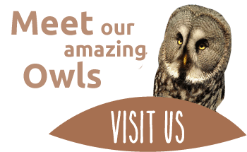 the owls trust - meet our amazing owls