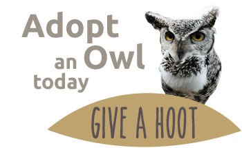 the owls trust - adopt an owl today