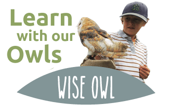 the owls trust - learn with our owls