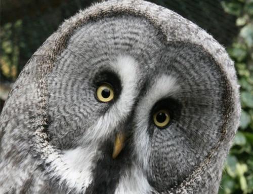 Understanding Owls The Trust